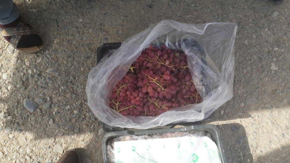 Купить Виноград Тоифи