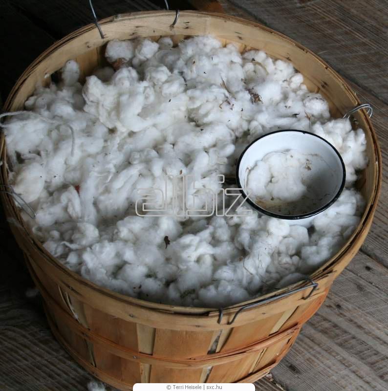 Купить Отходы хлопковолокна