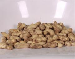 Арахис - земляной орех , растение семейства бобовых