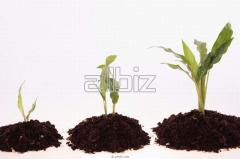 Удобрения микробиологические для растений