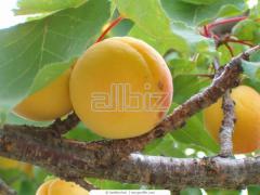 Соки абрикосовые