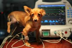 Диагностические исследования ветеринарные