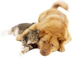 Консультации ветеринарные
