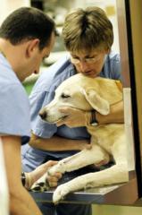 Скорая ветеринарная помощь